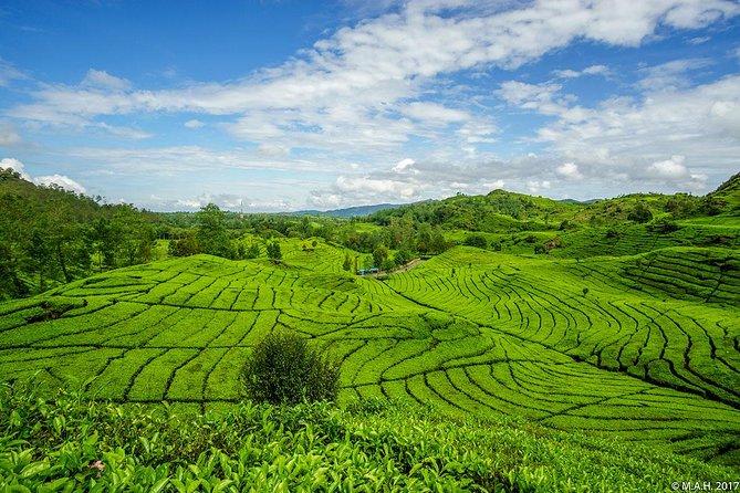 Exploring Tea Plantation at North Bandung