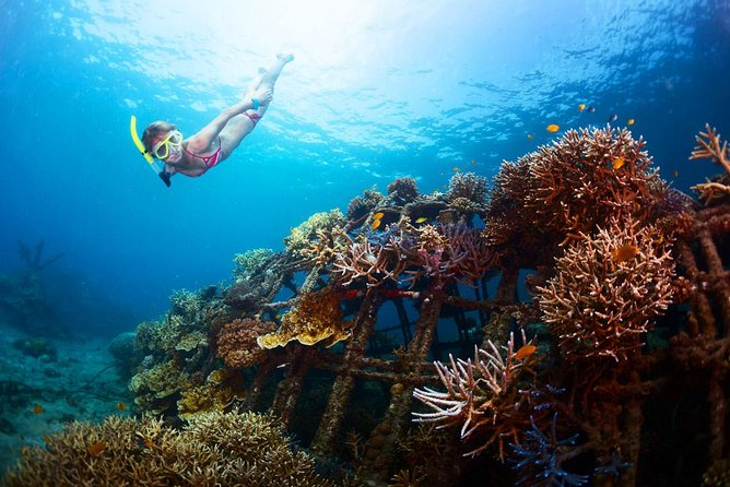 Bloo Lagoon Snorkeling East Bali With Transport and Lunch photo 6