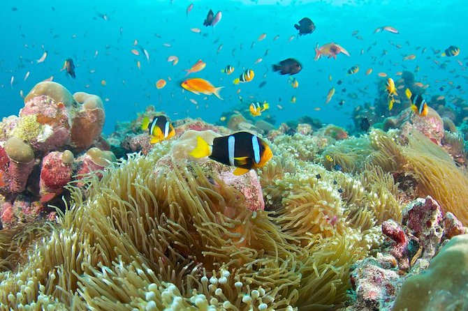 Bloo Lagoon Snorkeling East Bali With Transport and Lunch photo 16
