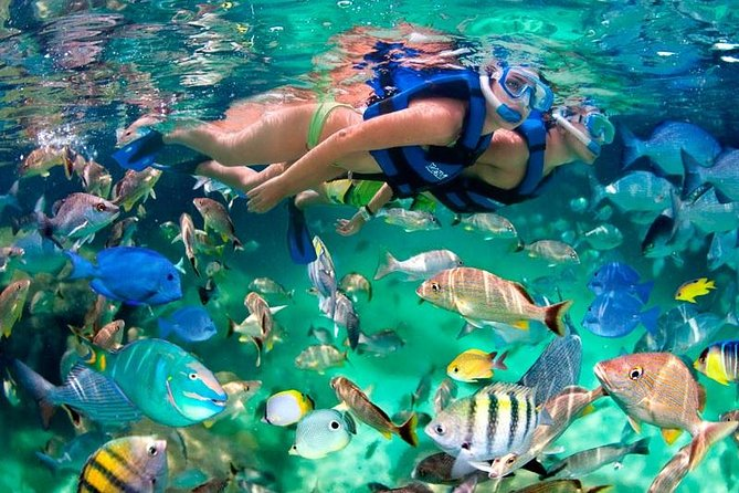 Bloo Lagoon Snorkeling East Bali With Transport and Lunch photo 17