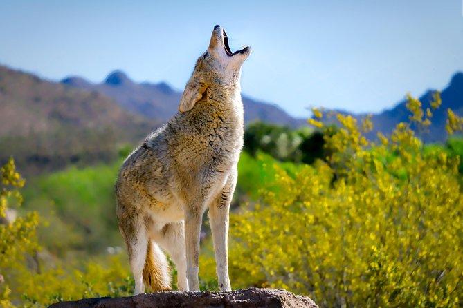 Skip the Line: General Admission Arizona-Sonora Desert Museum Ticket