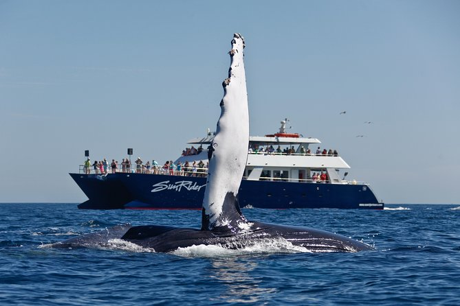 Whale-Watching Lunch Cruise in Los Cabos