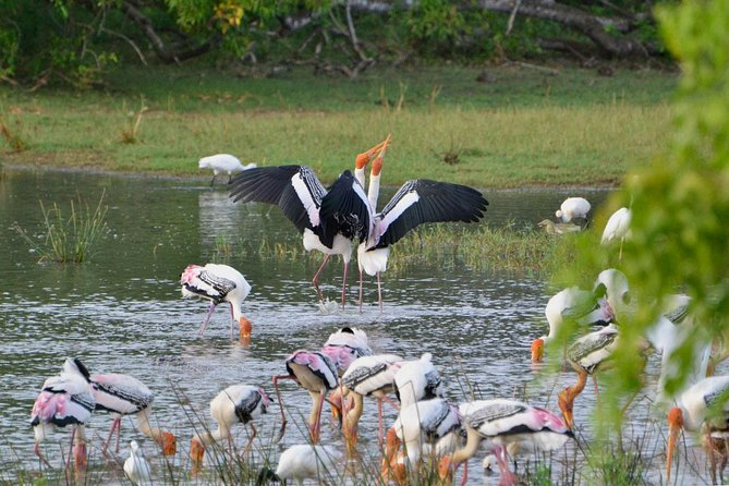 2 Days Tour to Yala & Kumana National Park From Negombo