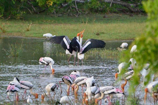 2 Days Tour to Yala & Kumana National Park From Negombo