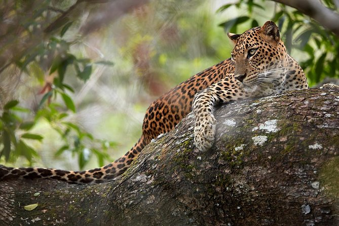 Day Tour to Wilpattu National Park from Colombo