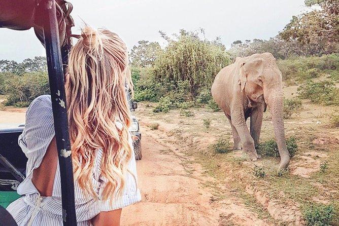 Wild Safari Udawalawe from Mount Lavinia