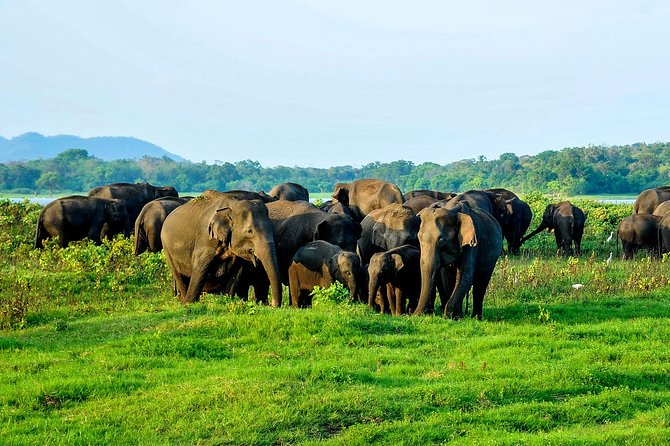 Minneriya national park tour from colombo with jeep safari