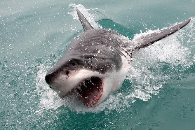 Cape town, Shark Diving Gansbaai