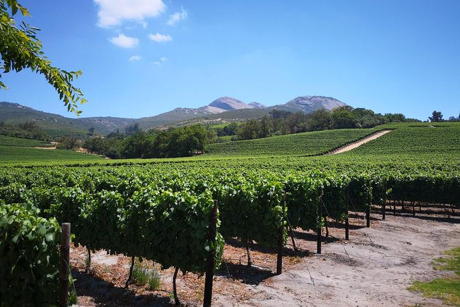 Private Cape Winelands Guided Day Tour from Stellenbosch OR Franschhoek OR Paarl photo 10