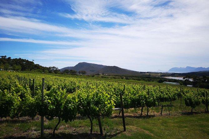 Vineyards en route
