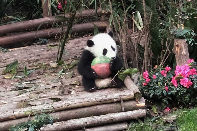 Chengdu Private Panda Trip with Afternoon Private Custom Tour photo 3