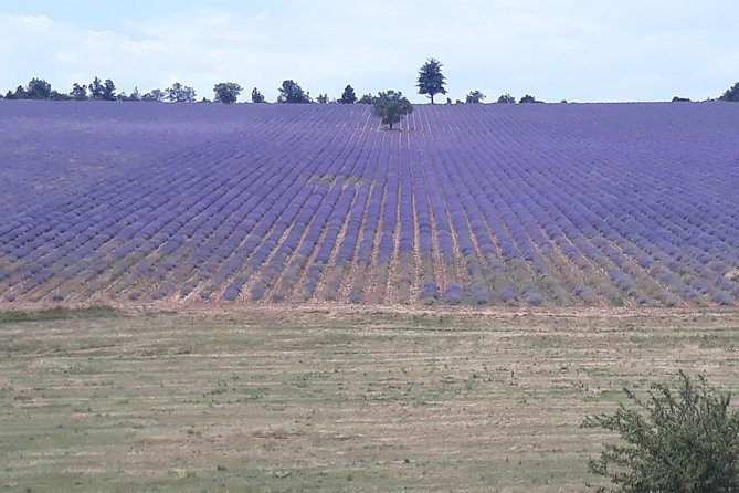 Lavender Tour Sault from Marseille photo 4
