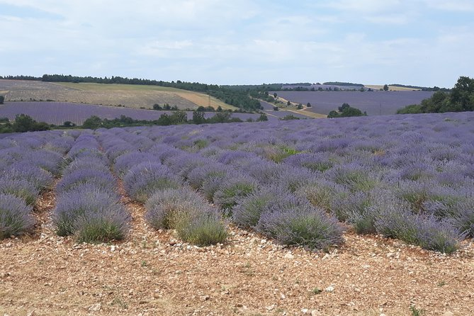 Lavender Tour Sault from Marseille photo 8