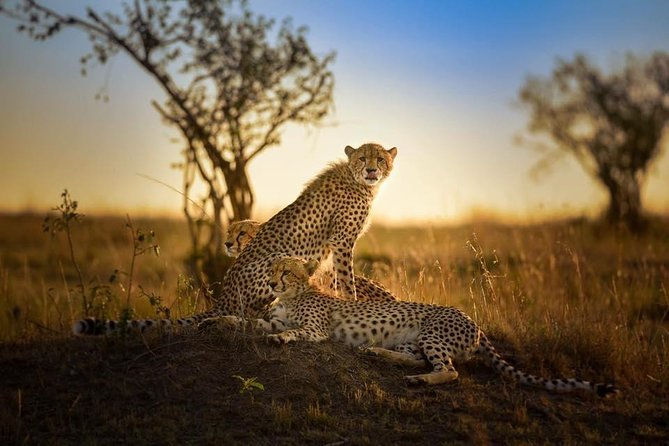 7D6N Masai Mara, Migration, Big Cat Photography Tour