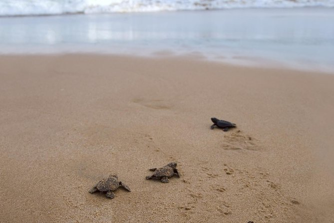 Sea Turtle Release in Puerto Escondido