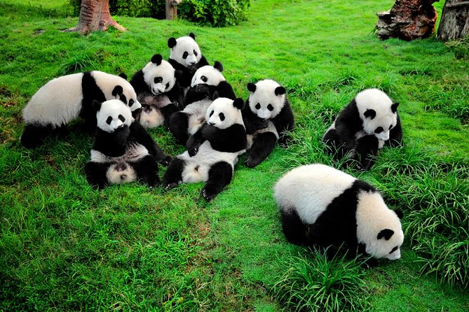 Visit to Panda Breeding and Research Center