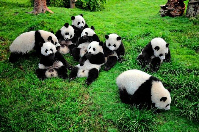 Visita al Centro de Investigación y Reproducción Panda