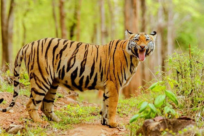 Tadoba Tiger Reserve Tour Of India