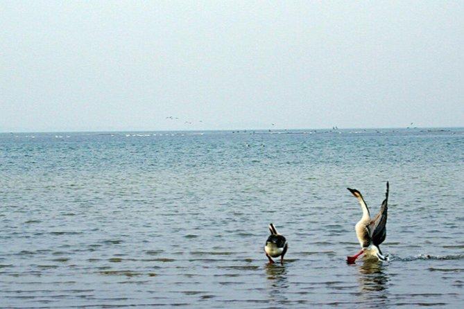 Nanji Hill Poyang Lake Nature Reserve