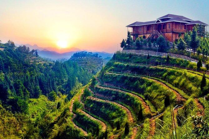 Anxi Tea Garden