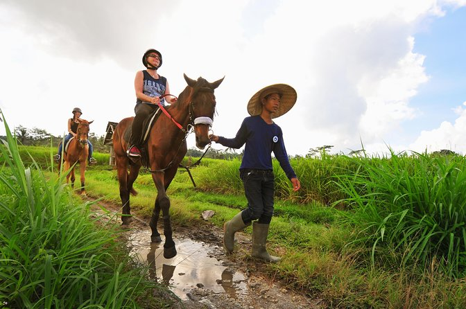 Bali Horse Riding Through Rice Fields in Ubud