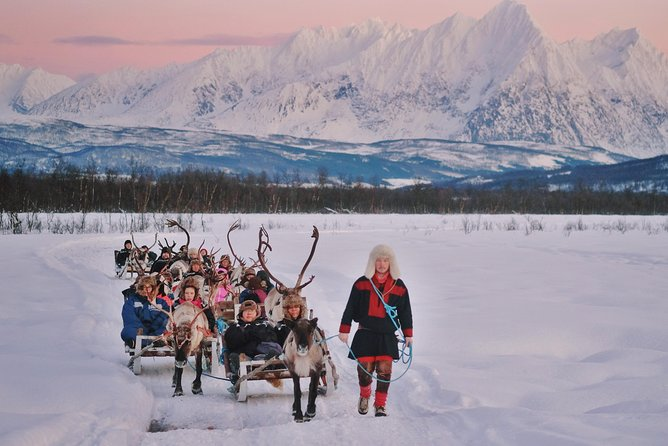 Reindeer Sledding and Sami Culture Including Lunch in Tromso