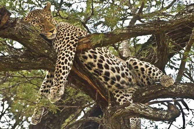 2 Days - Short Safari To Mikumi National Park