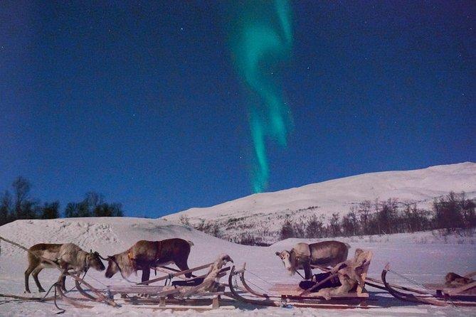 Northern Lights and Reindeer Sledding in Tromso