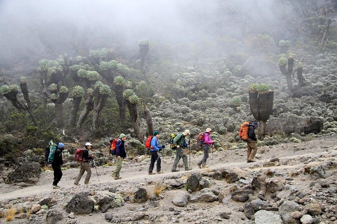 6 Days Kilimanjaro Trekking Via Marangu Route