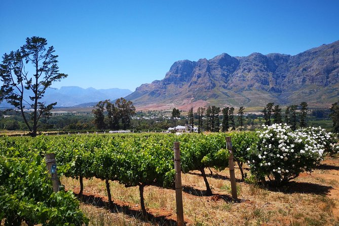 Private Cape Winelands Guided Day Tour from Stellenbosch OR Franschhoek OR Paarl photo 6