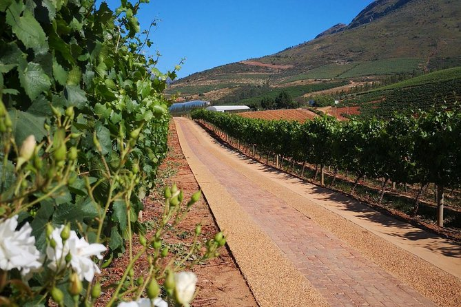 Private Cape Winelands Guided Day Tour from Stellenbosch OR Franschhoek OR Paarl photo 8