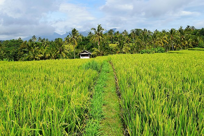 Bali Rice Field Trekking & Waterfall Private Tour
