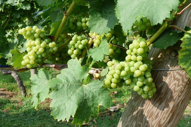 English Wine Tour to Kent from London