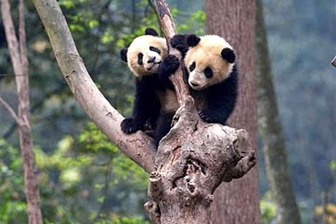 Chengdu: Full-Day Private Downtown & Panda Tour