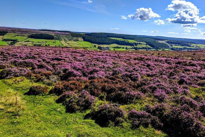 North York Moors in bloom