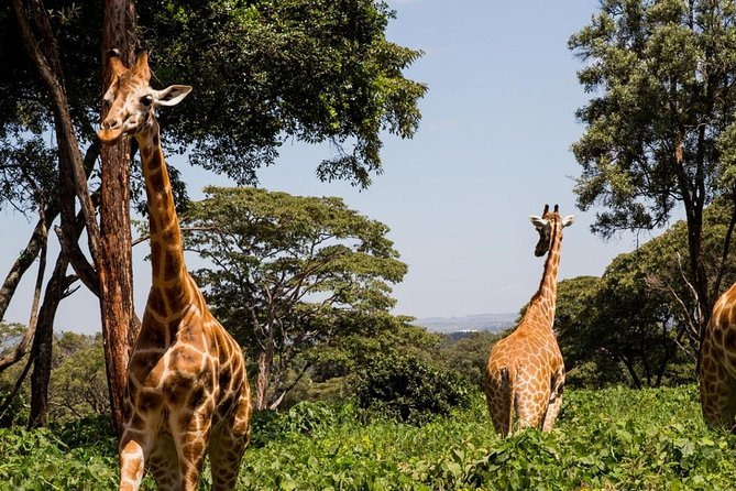Day tour to Giraffe Center elephant orphanage and lunch at carnivore restaurant