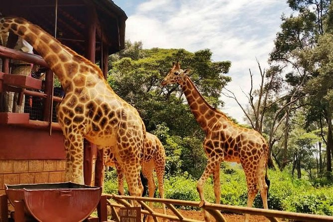 David Sheldrick, Giraffe Centre and Bomas of Kenya Full-Day Tour from Nairobi photo 1