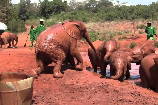 Half day guided tour to David Sheldrick elephant orphanage
