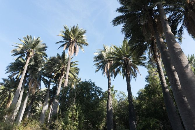 La Campana National Park - Private Guided Full Day Tour