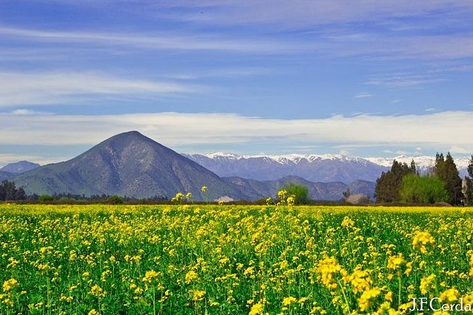 Private Wine Trekking Tour Including Chilean Country Grill