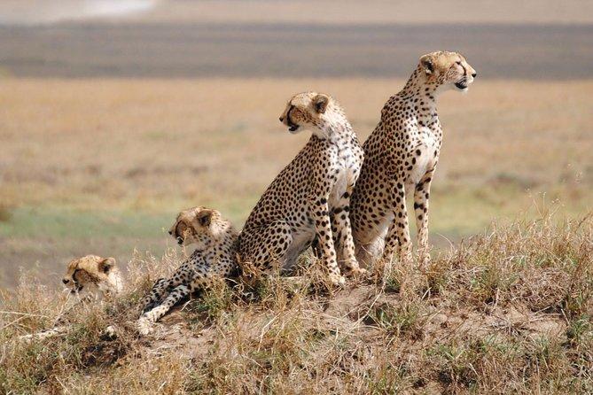 5 Days / 4 Nights Join group safari