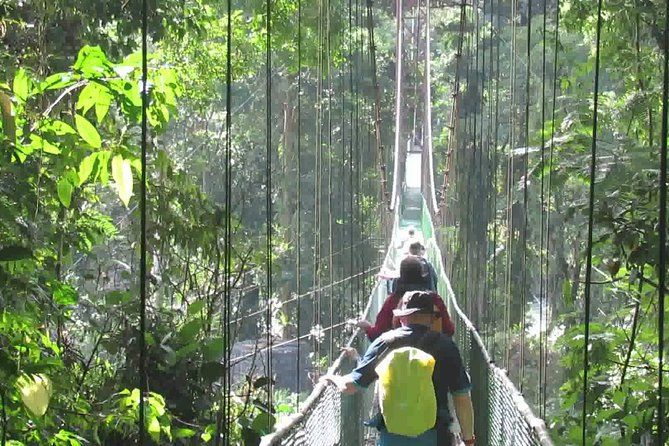 VIP Private Tour Chocolate Tour in the Rainforest & Hanging Bridge from San Jose photo 10