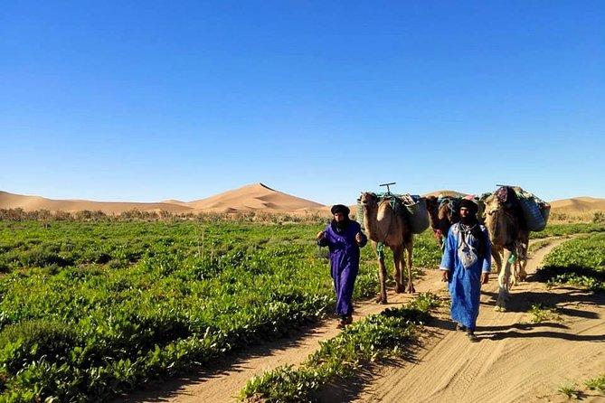 Desert Life Experience From Marrakesh