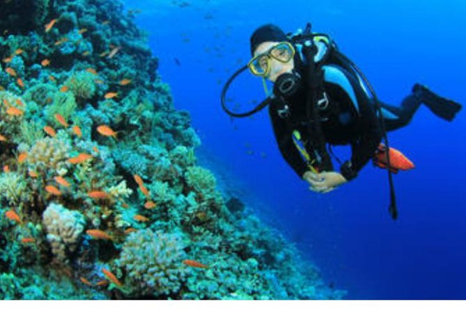 Red Sea Boat Trip to Tiran Island & Snorkeling from Sharm el sheikh