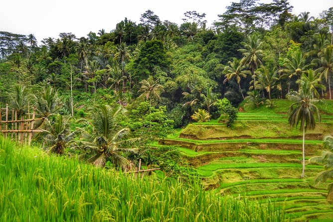 Kintamani highlands Tours: Rice Terrace, Temple and Waterfall