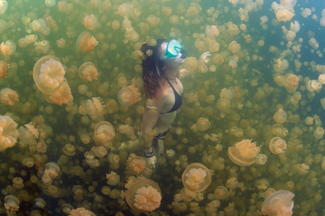 Jellyfish Lake, Milky Way, Beach and Rock Island Tour