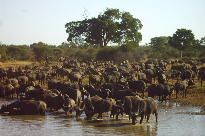 4 Day Kruger National Park Tour