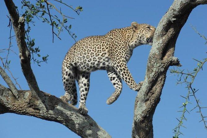 2 Day Tanzania Luxury Safari
