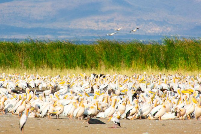 2 Days Northern Circuit Safari (lake Manyara & Ngorongoro) photo 12