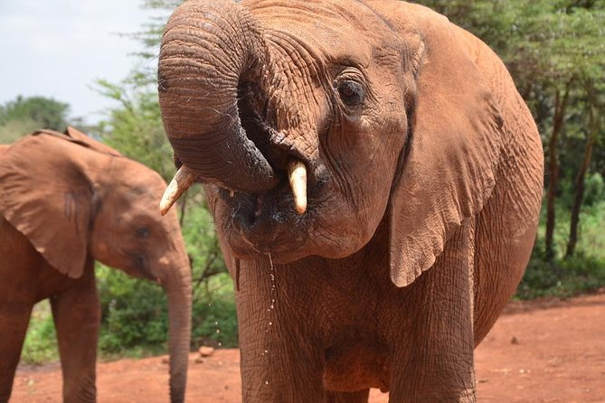 David Sheldrick, Giraffe Centre and Bomas of Kenya Full-Day Tour from Nairobi photo 8